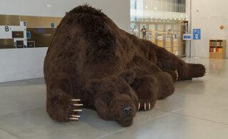 Почему русский медведь устроился на зимнюю спячку в Эстонском национальном музее?