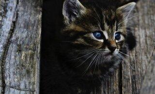 Pea 500 kassi ja vaat et sama palju probleeme: varjupaiga vabatahtlikke kurnab rekordarv hoolealuseid