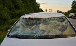 ФОТО | В Вильяндимаа автомобиль сбил лося. Животное погибло