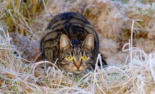 Kuidas kaitsta oma aeda võõraste loomade eest?