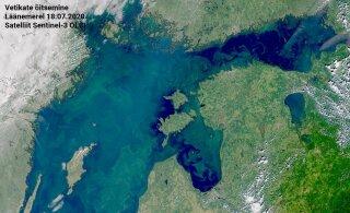 КАРТА: На каких пляжах из-за сине-зеленых водорослей купаться не рекомендуется