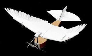 VIDEO | Teadlased ehitasid sulgedega drooni, mis lendab nagu lind