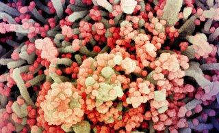 Koroonaviirus elab nahal viis korda kauem kui gripp: uuring