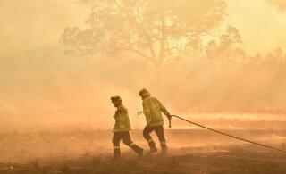 Отт Тянак сделал пожертвование австралийским пожарным