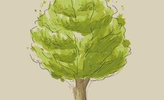 Joonista paberile puu ja saa teada, mida see sinu kohta ütleb!