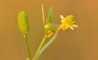 Lilled muudavad kliimamuutuse tõttu värvi