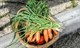 Вслед за Ласнамяэ общинный огород появится и в Мустамяэ. Как получить грядку, что можно сажать и сколько надо платить?