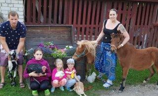 Linnast maale kolinud Kase talu pere hooldab 150 looma ja jagab kodutunnet lastekodulastele
