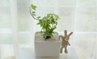 Нет равных: названы самые полезные комнатные растения