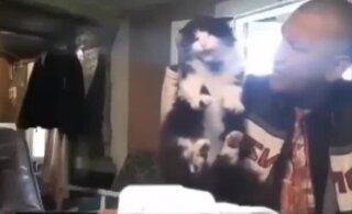 ФОТО и ВИДЕО: Избил кота и напоил водкой собаку. Житель Вильяндимаа хвастается своими жестокими выходками в соцсетях