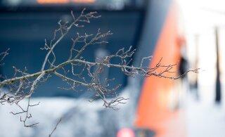 В Президентский поход на поезде: в субботу Elron запустит удлиненный состав на маршруте Таллинн-Аэгвийду