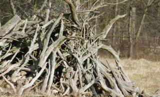 Metsloomaühing kutsub ettevaatlikkusele: metsaserva jäetud oksahunnikutes on lindude pesad