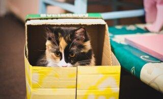 Vahetad elukohta või lähed suveks maale: nippe, kuidas kassiga muretult kolida