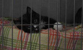 VIDEO | Selline on loomade varjupaiga argipäev, mis jääb külastajale märkamatuks