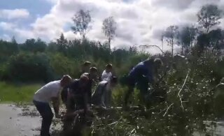 VIDEO | Vendluse võrdkuju: maanteele langenud puu kõrvaldati ummikus seisnud autosõitjate endi kätega