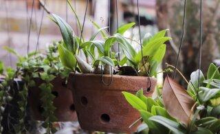 Пять секретов ухода за комнатными растениями. Превратите ваш дом в цветущий оазис!