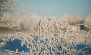 Talve külmarekord: Jõhvis mõõdeti hommikul -30 kraadi