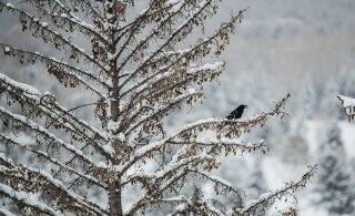 Uue nädala ilmaprognoos on paljulubav: sajab lörtsi ja vahepeal sekka ka lund