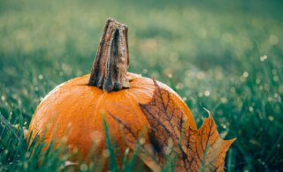 Большой гороскоп на октябрь 2020 года: самые счастливые дни и советы для всех знаков Зодиака