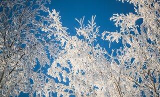 Сильные морозы возвращаются: в Центральной Эстонии до -28 градусов, в Таллинне до -24 градусов