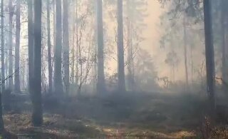 ФОТО И ВИДЕО | В Тартумаа горит восемь гектаров леса