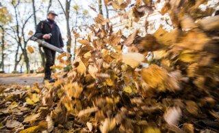 Управа Ласнамяэ продолжает помогать квартирным товариществам с уборкой