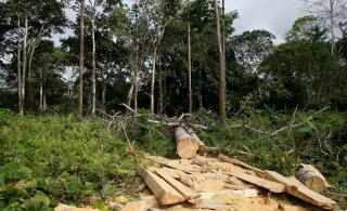 Europarlament: EL-i tarbimisest tingitud metsade hävitamine tuleb peatada