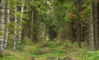 Пожилой французский орнитолог заблудился в лесу Ляэнемаа