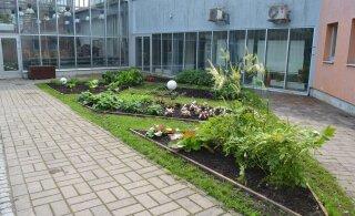 Tallinna botaanikaaed saab uue hoone