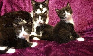 Ka Pärnus algas emadepäev kurval noodil: varjupaiga juurde viidi pappkastis kassipesakond