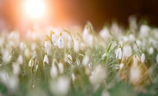 Что обещают звезды в первый месяц весны? Гороскоп на март 2021 года