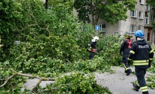 FOTOD | Saaremaal on tormituuled murdnud nii mõnegi puu, kuid ilm näitab nüüd rahunemise märke