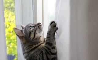 TÕESTATUD   Kas kassid siis ikkagi saavad oma nimest aru või ei?