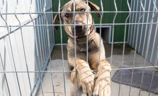 Aprillis toimunud algatusega leidis uue kodu 38 koera ja annetati tuhandeid eurosid!