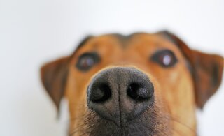 Milline on aroomiteraapia mõju lemmikloomadele?