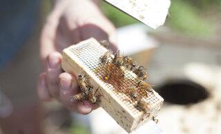 ФОТО: Пчелы из Собора Парижской Богоматери чудом пережили пожар