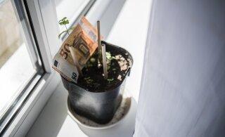 Krüptorahanduse eksperdid murravad rahaga seotud mustreid: raha kasvab küll puu otsas!