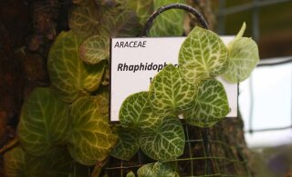 Kae perra! 18 taimeliiki said rahva abiga eestikeelsed nimed