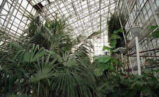 """В Ботаническом саду можно увидеть """"Растения, изменившие мир"""""""