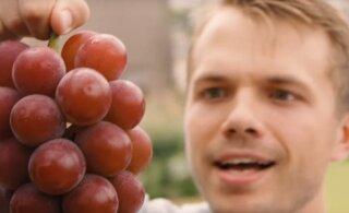 VIDEO   Ruby Roman – viinamarjasort, mille üks mari võib maksta rohkem kui su telefon