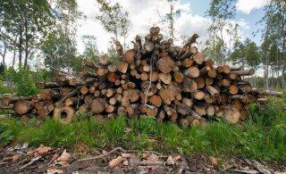 Телеканал: после работ на границе Латвии с Эстонией пропали лесоматериалы на десятки тысяч евро