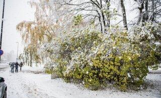 Предсказатель погоды: предстоящая зима будет безрадостной