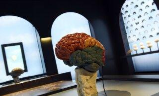 Teadlased: otseühendus inimaju ja interneti vahel tuleb lähiaastakümnete jooksul
