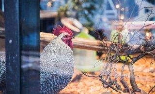 ФОТО: Тарту готовится к рождественским праздникам