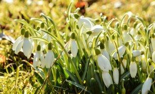 Март ожидается несколько теплее нормы