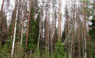 Leili metsalood | Natura metsatoetuste taotlemisest