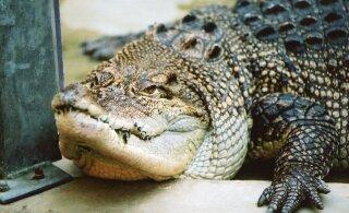 USA politsei imelik hoiatus: inimesed, palun ärme tooda enam narkot täis alligaatoreid