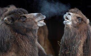 Таллиннский зоопарк приглашает на ночные походы