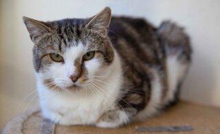 Wagneri lugu   hüljatud kass on nii suures stressis, et sööb vaid siis, kui teda järjepidevalt paitada