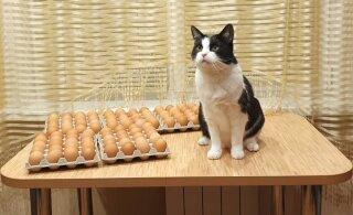 ВИДЕО | Новый флешмоб — кошки против куриных яиц